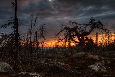 Мрачные сказки Воттоваары Карелия Воттоваара закат лес дерево камни