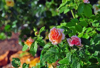 Дождь и солнце, день чудесный!