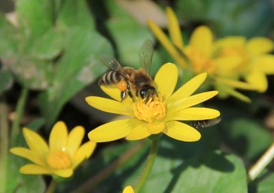 Мухи отдельно, пчелы отдельно.