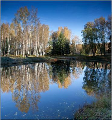 Морозное утро Павловск, октябрь, утро, мороз