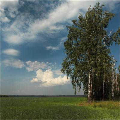 Руси благодать.. лето пейзаж поле туча берёзы