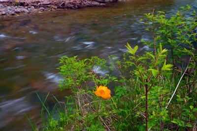 Краски весны алтай река жарки
