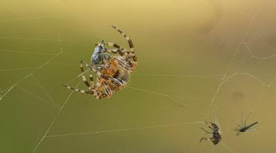 Питающийся паук паук паутина макро лес