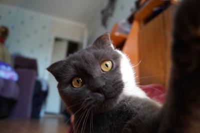 *** кошка