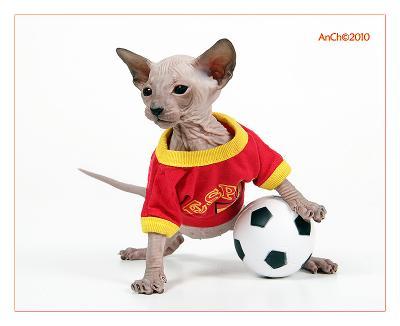 Четвертьфинальная ) кот  футбол