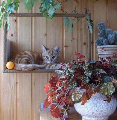 Вписался! ) день лоджия котенок рамка