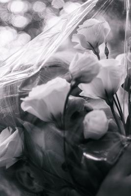 *** цветы парень эстетика