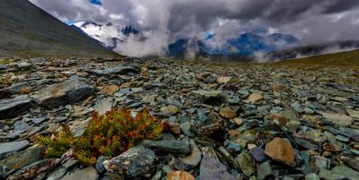 На перевале. Горный Алтай Катунский хребет река Текелю Сулу-Айры