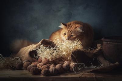 Там кто-то есть... натюрморт композиция постановка сцена орехи кот питомец друг рыжий