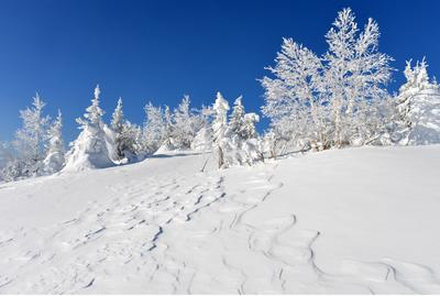 Морозко Зима снег иней мороз