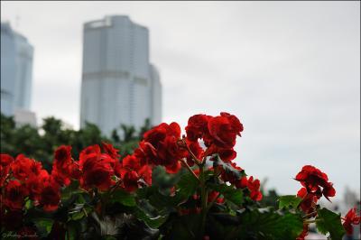 Цветы и башни