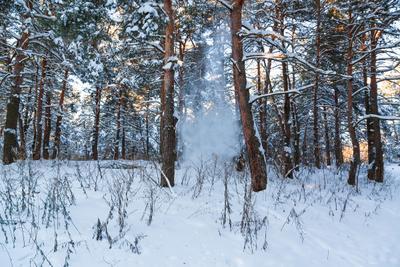Снег осыпается с сосен зима пейзаж снег