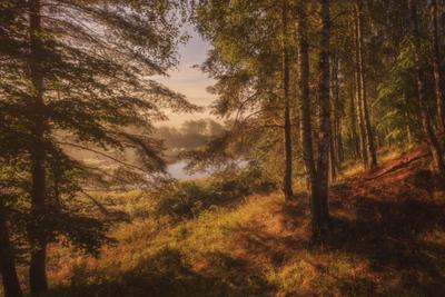 Утро в березовом лесу озеро горы лес природа закат рассвет красота приключения путешествие облака