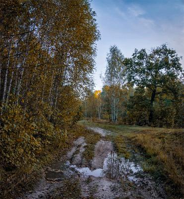 Осень. Мокро пейзаж осень