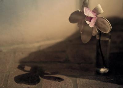 *** подруга-депрессия *** магнолия цветок натюрморт пастель розовий нежность грусть дует тень