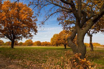 Осень осенний пейзаж деревья природа