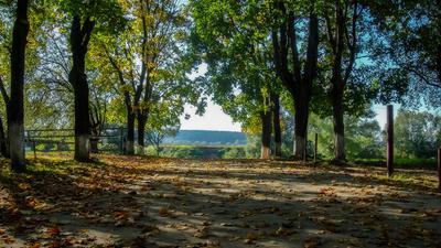 Осеннее ... осень пейзаж природа деревья аллея