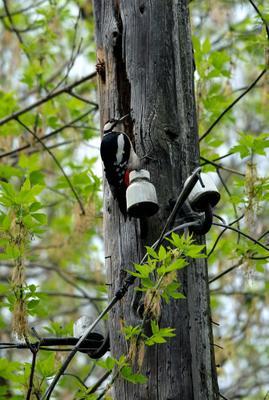 ..телеграфист.. лес столб провода дятел дробь