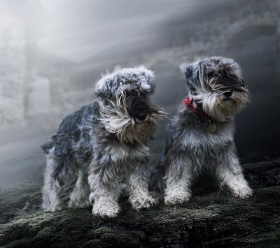 Wind Digital Photo Art Dog Kennel Hildebert's Eltons Fantasies