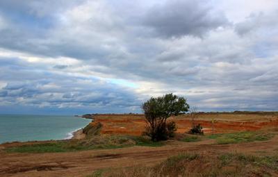 На семи ветрах севастополь кача море балка немецкая дерево тучи