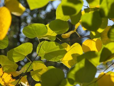 Осенний холст осень жёлтые листья под солнцем