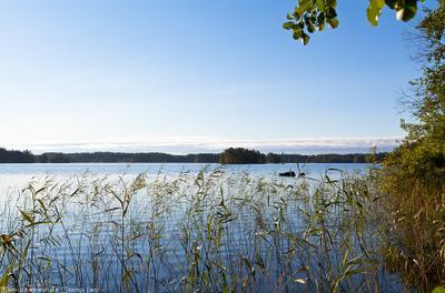* * * озеро, утро, Финляндия