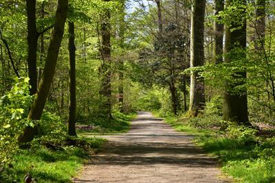Лесными тропами. весна лес зелень листва