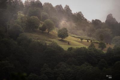 Горные поля Грузия горы туман лес
