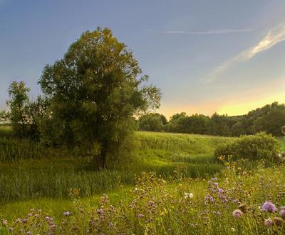 Последние летние вечера Деревня Рождество-Лесное лето поля деревья цветы вечер август