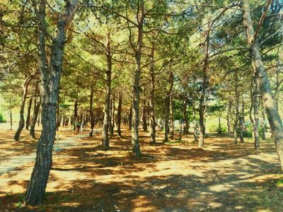 Солнечный лес Лес природа