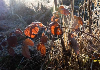 осень*** Кубайка, осень, листья