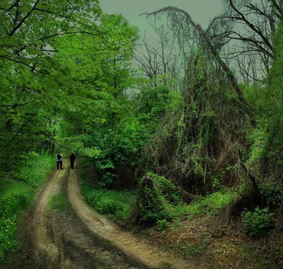 в заповедном и дремучем лесу лес, заповедник, чаща, путники, дорога, деревья, кустарники, трава, цветы