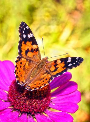 На закате лета макро бабочка осень природа