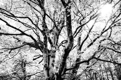 *** Дерево ветви ч б