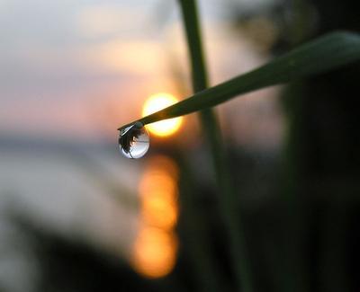 Рассвет роса рассвет утро капля