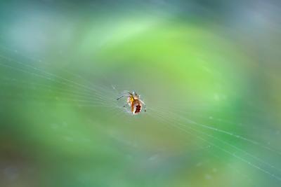 Где-то во Вселенной... паук насекомое макро природа фауна фон боке свет цвет