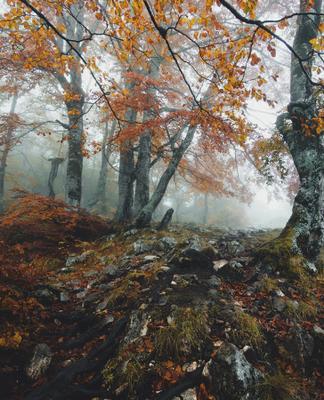 Осень в лесу Дурмитора