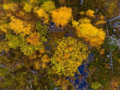 Осенний лес Карелии autumn осень лес karelia ладога карелия