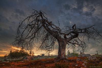 Воттоваара Карелия Воттоваара закат дерево