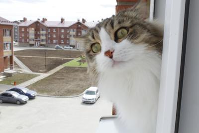 Весна пришла кот животные