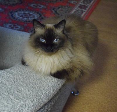 Кошка кошка животные