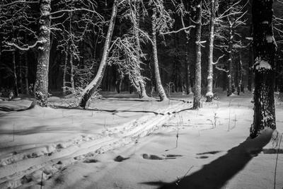 *** лес лыжня снег вечер