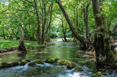 Горная речка греция туризм путешествия река лето лес вода деревья зелёный