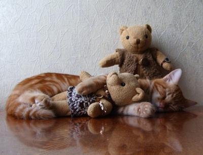 Ну, что он в ней нашел? кот игрушки сон