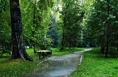 "Осень. Парк ""Берёзовая роща"""