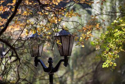 Осеннее настроение осень фонарь парк Кисловодск
