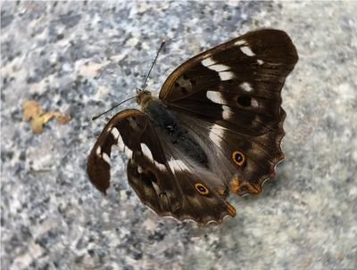 *** бабочки