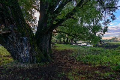 Дерево... Лето август речка дерево