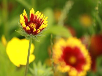Juicy print цветок лето краски