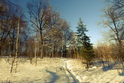 В середине марта пейзаж природа весна март лес